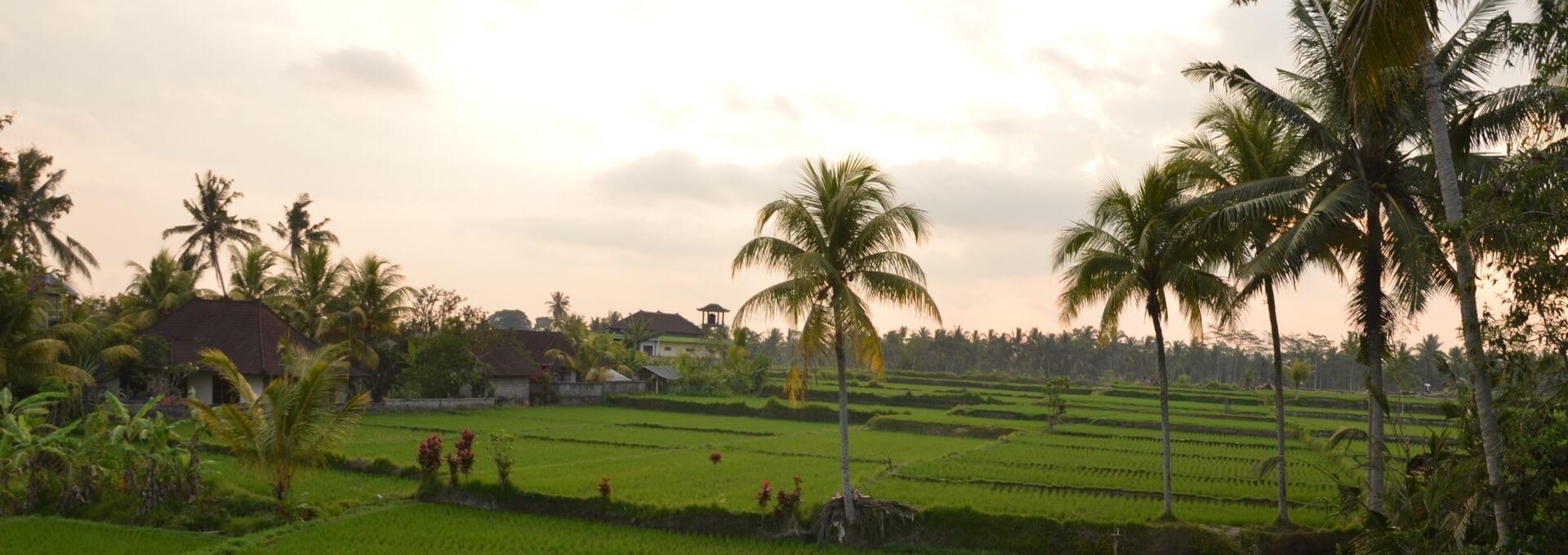 Bali, rizières d'Ubud